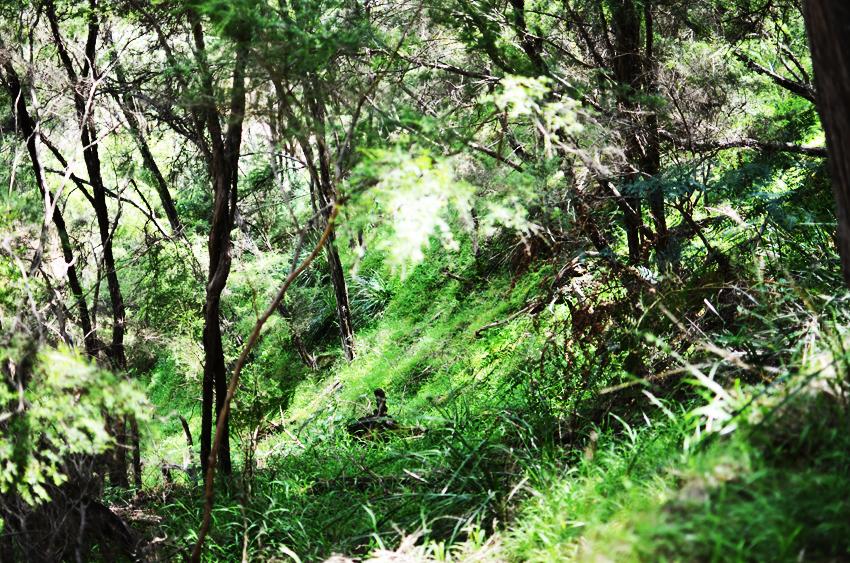 green-bush b