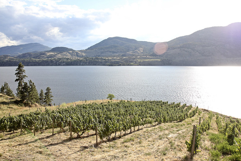 the view, and where the wine came from