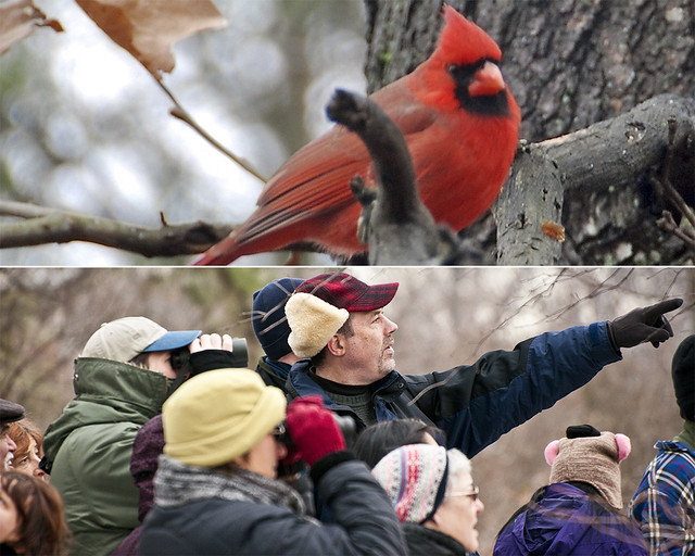 Winter Bird Stroll with naturalist Brad Klein. Photos by Gerry Stewart (top), and Michael Ratliff (bottom).