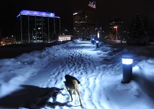 Rosie wearing just her jacket explores the lit up snowy path to the war memorial site, American flag, Park Strip, downtown, Anchorage, Alaska, USA by Wonderlane