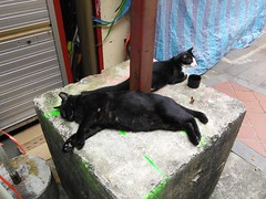 Chinatown cats