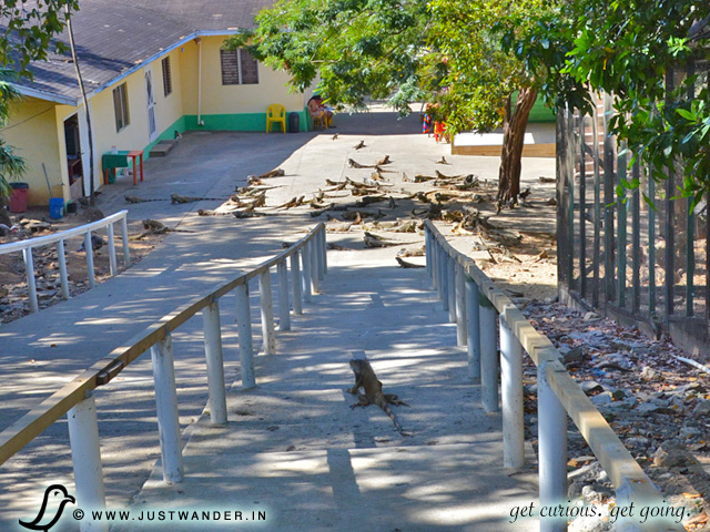 PIC:  Arch's Iguana Park, Roatan, Honduras - Excursion from Caribbean Cruise - Entrance></p> <p><img src=