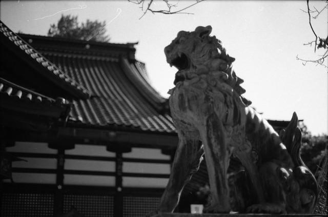 尾上神社狛犬・阿 - Guardian lion-dog at Shinto shrine