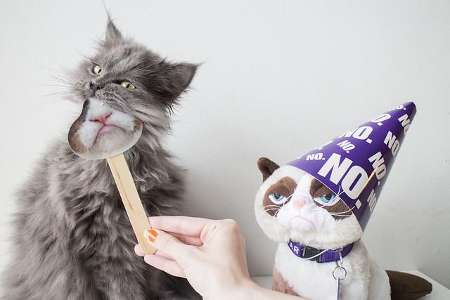 Grumpy Cat Birthday_6