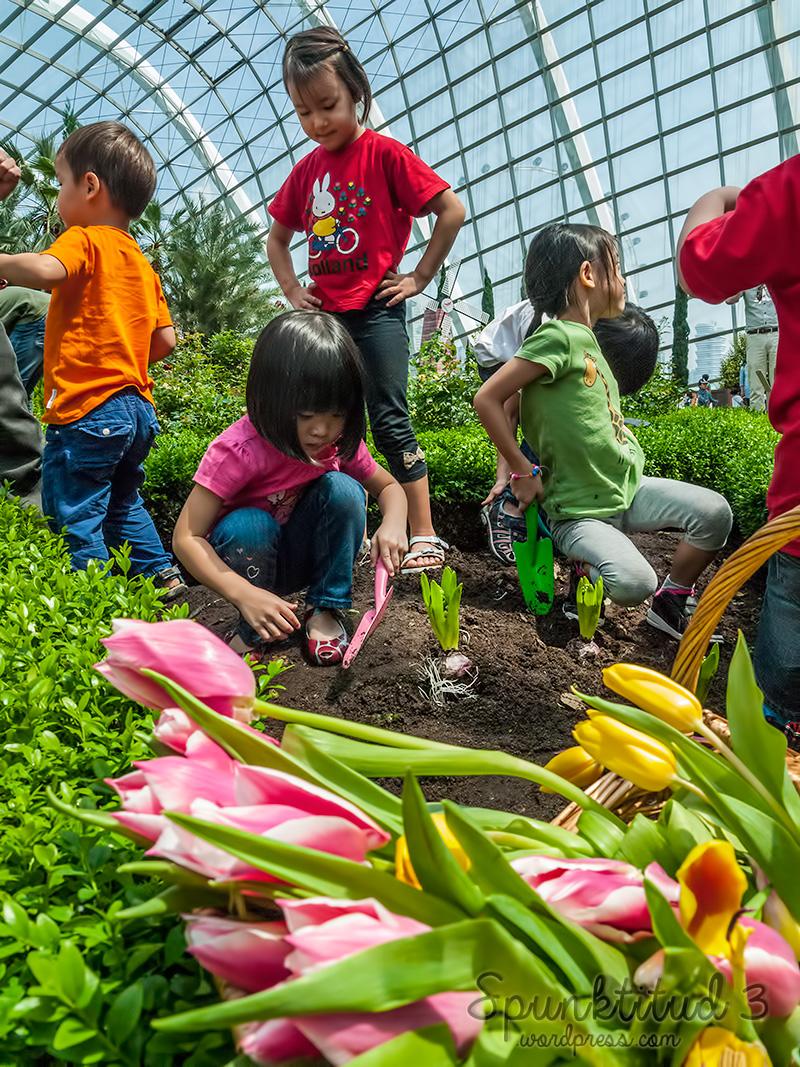 Tulip Planting & Miffy @ Tulipmania 2014