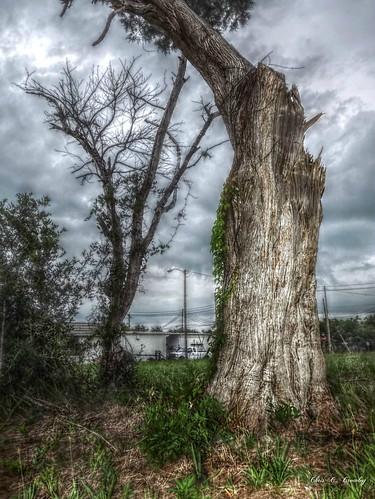 treeonacloudyday granadablvd ormondbeachfl stormy clouds scenic landscape