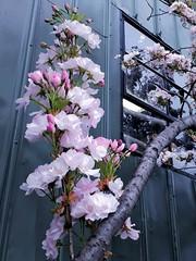 SODO Springtime