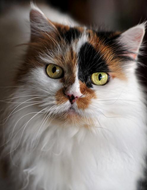 Maui cat, Nikon D300S, Manual Lens No CPU