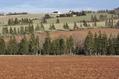 springfield pei canada farm hills hilly fields trees