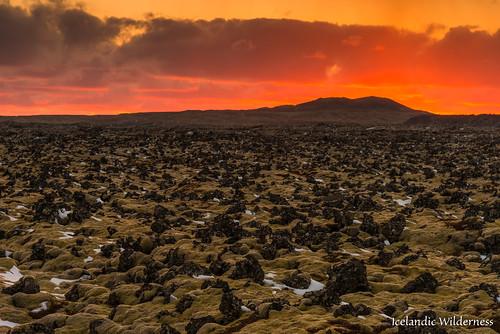 plant snæfellsnes sky moss landscape sunset lava iceland westernregion
