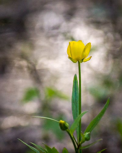 Wildflower, Flower, Yellow, Reflection, Light, Swamp