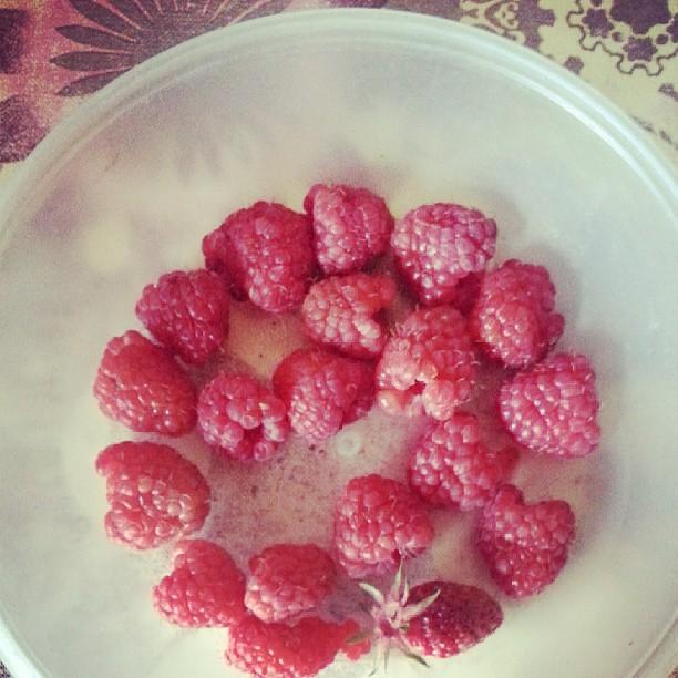 Quel bonheur d'avoir un potager #dimanche #blog #blogueuse #jardin