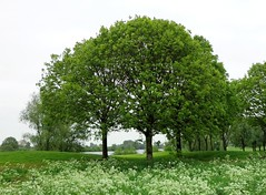 Three Spring Trees with Flowers