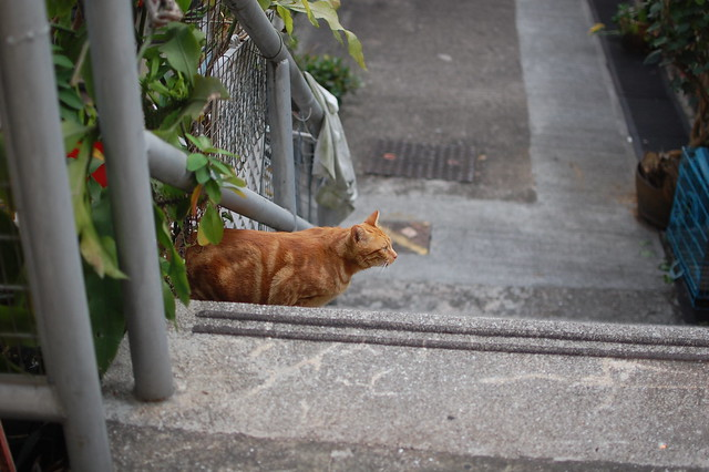 Garfield or just another orange tabby?