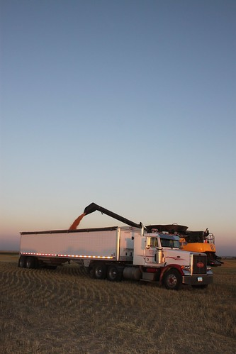 In this wheat, we haven't been using our grain cart so the combine just stops to unload.