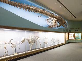 Skeletal Exhibit at Batural History Museum