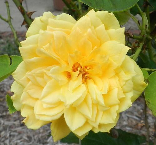 todayflowersDSCN1509