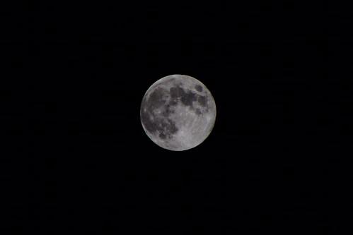 Harvest moon 2013 04