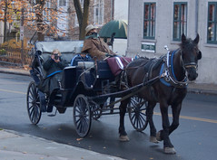 land vehicle(0.0), vehicle(1.0), pack animal(1.0), coachman(1.0), horse(1.0), horse harness(1.0), horse and buggy(1.0), carriage(1.0), cart(1.0),