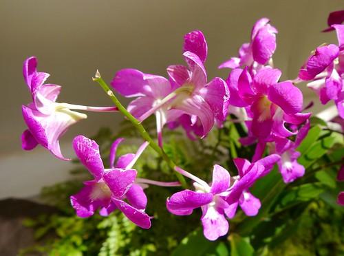 Tropical Flowers grown outdoors - Hawaii 2013