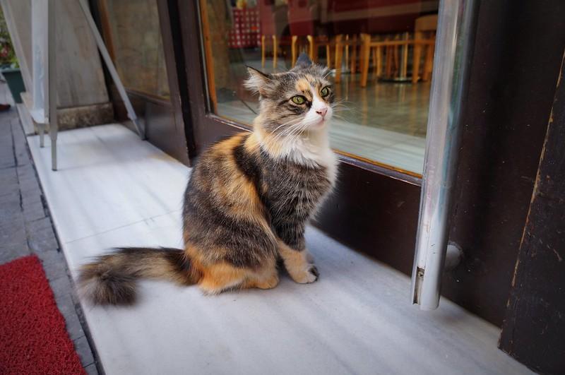 Stray-Cats-Istanbul-(5)