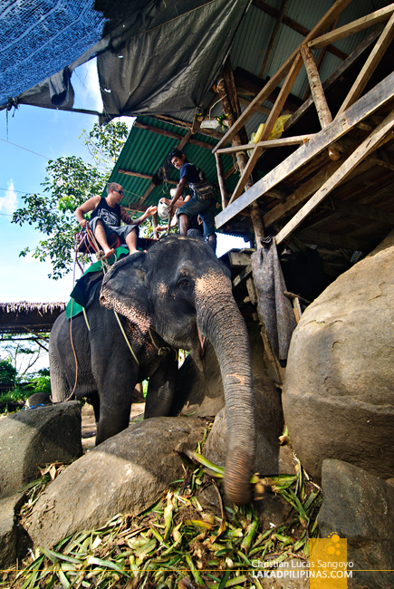 Elephant Ride at Phuket's Camp Chang Kalim