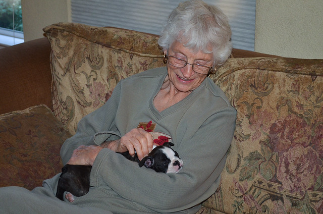 An elderly woman cradling a Boston Terrier puppy.