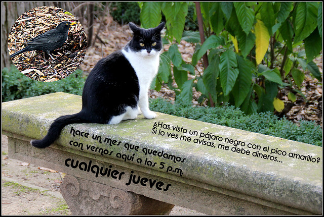 Un gato del jard n bot nico de madrid en enero flickr for Alejar gatos del jardin