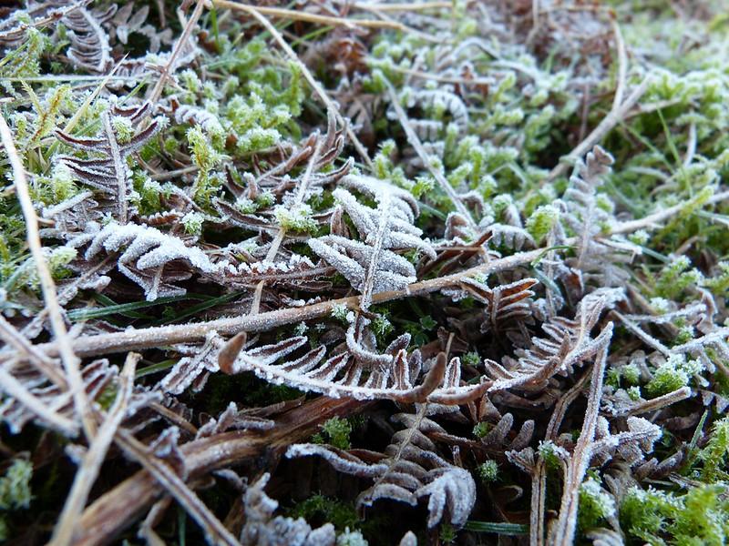 P1060670 - Frost on Cefn Drum