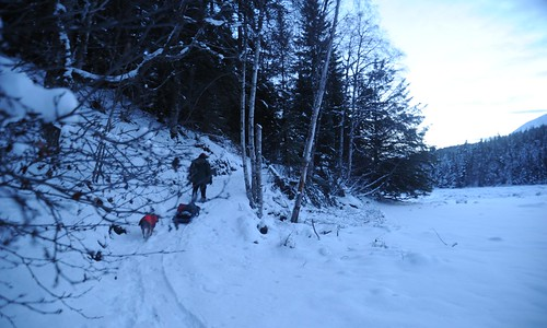 Cutting the trail, Ward Lane snowshoeing with gear on a toboggan and Rosie right behind, via the earthen ramp Ward dug out by hand last summer, snow, trees, forest, estuary flats, looking south, Sunrise Island, Kenai Peninsula, Alaska, USA by Wonderlane