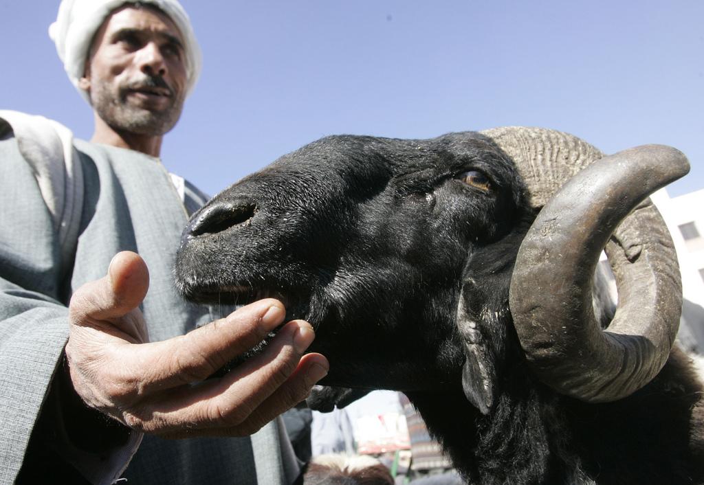 8. Vendedor en el mercado del cairo. Autor, Nasser Nouri