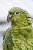 Leading 10 Many Popular Types Of Parrots