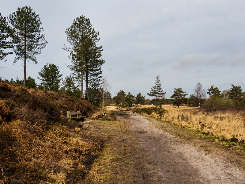 Sika Trail, Wareham Forest