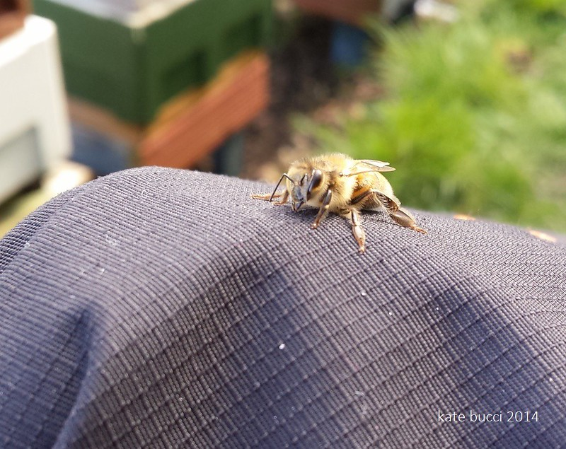This bee wanted to come home with me