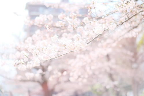 sakura fusion pink
