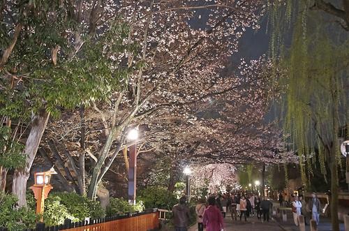 【写真】2014 桜 : 祇園白川/2020-09-13/IMGP5590
