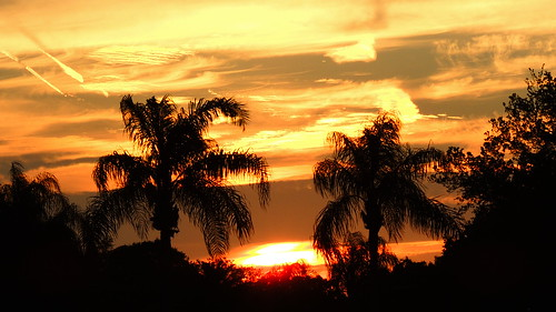 blue sunset wallpaper sky orange sun tree silhouette yellow night clouds landscape evening flickr contrail florida palm bradenton cloudsstormssunsetssunrises