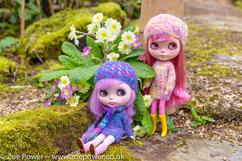 Blythes and Primulas