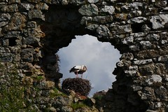 le temps des cigogneaux - Photo of Lison