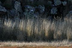 Basalt and Grass