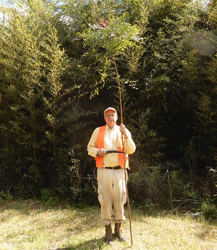 man botany botanist saw nandina shrub tree bamboo stem stalk fieldtrip vest science study plants botanik cemetery wood anatomy growth primary secondary cambium xylem phloem