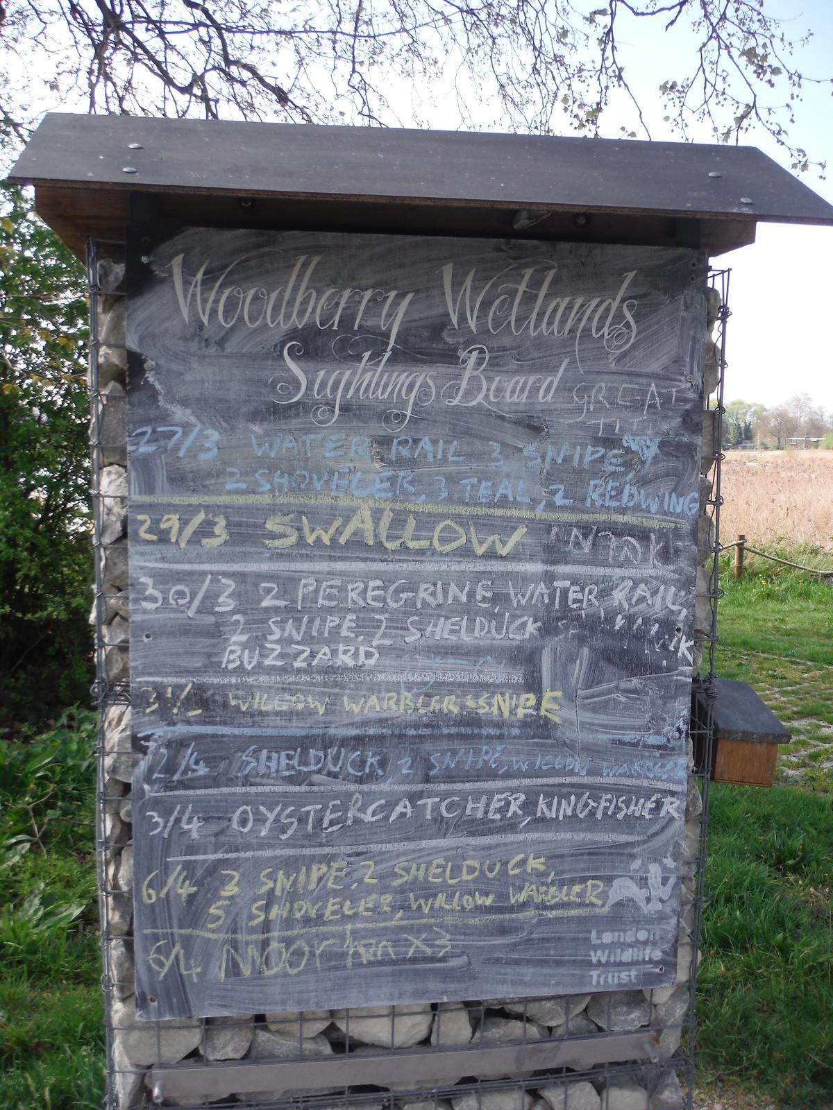 Sightings Board, Woodberry Wetlands SWC Short Walk 26 - Woodberry Wetlands (Stoke Newington Reservoirs)