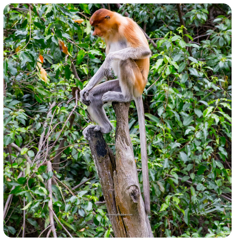 Borneo-20170413-_MG_8104