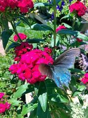 025e ~ Butterfly