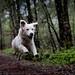 Superdog by Cle Manuel