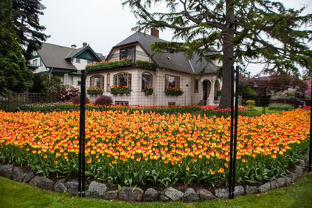 Beach dr. Tulip House (1)