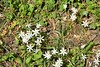 Wild Flowers 30.04 (6)