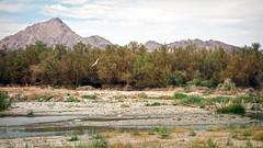 Duck Creek Site