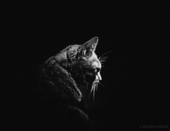 The Dark Kitty
