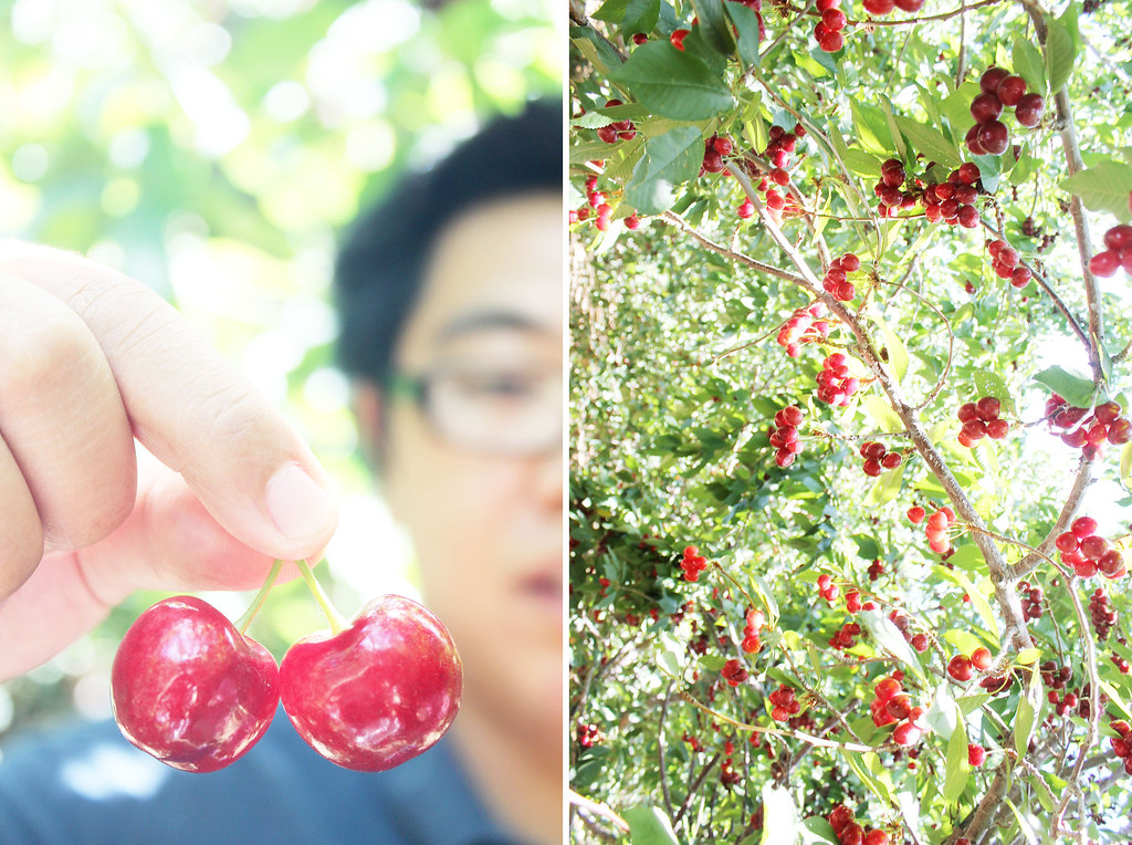 """why do cherries look like little butts?"""